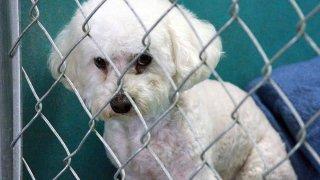 15-Campana-Desocupar-los-albergues-en-Arizona-mascotas-adoptadas-en-Phoenix-y-Tucson-perros-gatos-adoptados