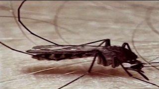 Confirman_caso_humano_del_virus_del_Nilo_Occidental.jpg