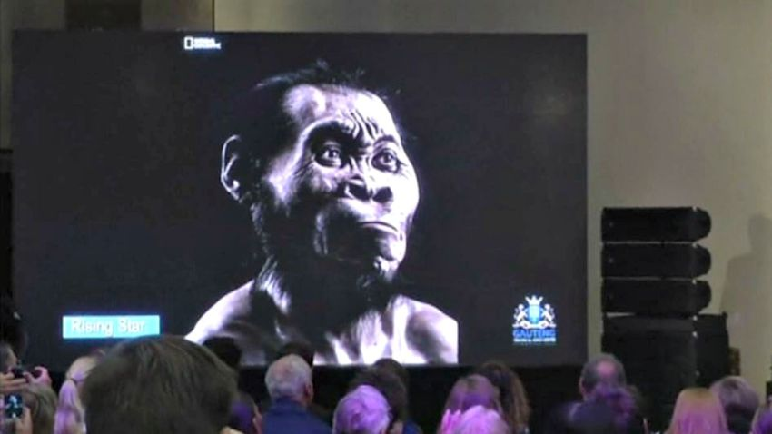 TLMd-evolucion-del-hombre-humano--homo-naledi-ancestro