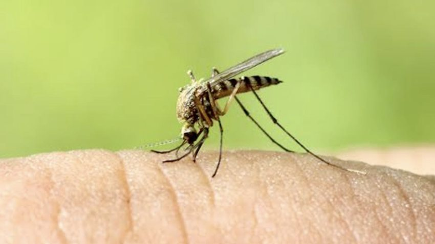 fumigan-condado-riverside-mosquitos-virus-nilo