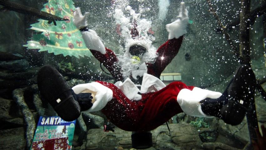 Santa Claus acuático en el Zoológico de Guadalajara.