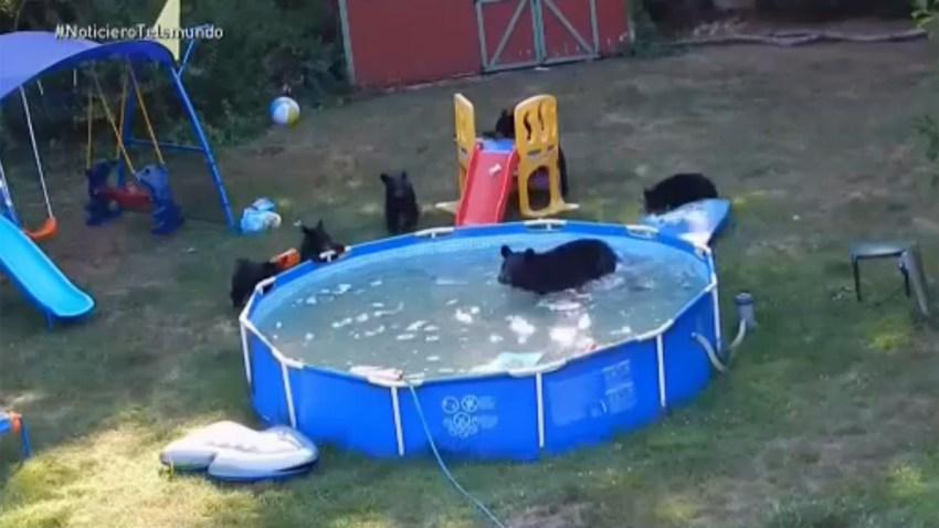osos-en-piscina