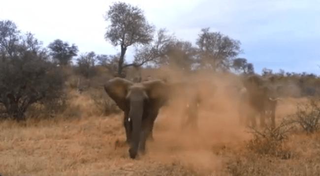 tlmd_elefanteataqueok