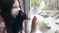 12 razas de perros ideales para vivir en apartamentos
