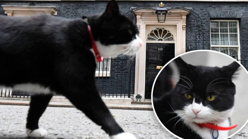 Palmerston, el ratonero jefe de la Foreign Office, el servicio diplomático británico.