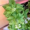 tlmd_plantas_que_atraen_buenas_vibras_a_tu_casa_3