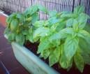 tlmd_plantas_que_atraen_buenas_vibras_a_tu_casa_2