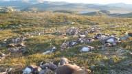 Tormenta feroz: rayos matan a más de 300 renos