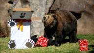 """Patas de caballo para el tigre: """"Zoorpresa"""" de Navidad"""
