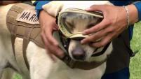 El equipo canino de las fuerzas armadas mexicanas que salvaron vidas tras el terremoto del 19 de septiembre de 2017 en México.