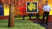Si alguna vez te has preguntado por qué de repente comienzas a ver diferentes colores en las hojas de los árboles, aquí te compartimos la...