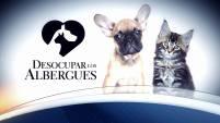 Miles de animalitos encontraron un hogar el día de hoy en nuestra campaña #DesocuparLosAlbergues