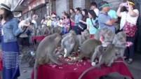 El festival anual del mono atrae a miles de turistas a la provincia donde queda la ciudad de Lopburi, en Tailandia.