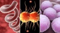 Gonorrea, sífilis y clamidia: por qué vuelven las temibles venéreas en Estados Unidos