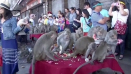 Realizan festival anual de macacos en Tailandia