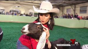 Competencia de ordeña de cabras en el FWSSR 2018