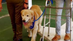Perros que marcan la diferencia en terapia de pacientes