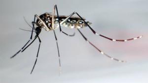 Todo sobre el virus del Zika