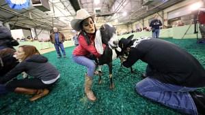Tremenda competencia de ordeña de cabras en el FWSSR