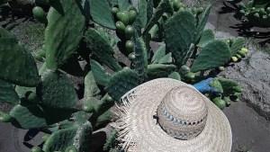 El nopal y la tuna, riqueza heredada a los mexicanos