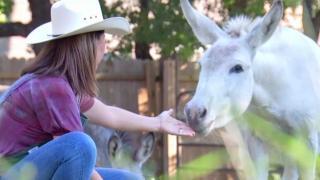 [TLMD - Dallas] La dueña de los burros