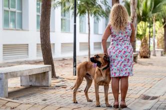 Perro-terapia: así ayuda a víctimas de violencia doméstica