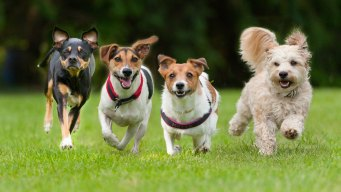 ¿Deberías adoptar un perro? Te ayudamos a decidir