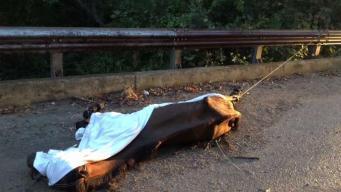 Encuentran caballos muertos en el sur de Dallas