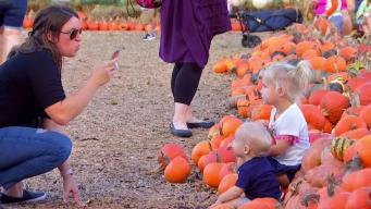 Miles de calabazas en el Dallas Arboretum