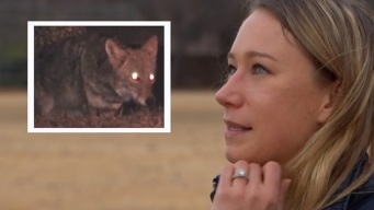 Habla mujer que tuvo encuentro con coyote en Frisco