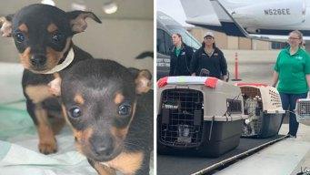 Animales viajan desde el norte de Texas para adopción