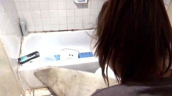 Residentes en Richardson denuncian vivir entre ratas