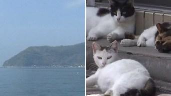 La misteriosa isla donde hay más gatos que humanos