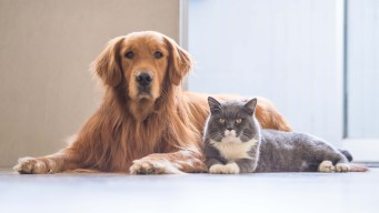Los alimentos que tu mascota nunca debe consumir