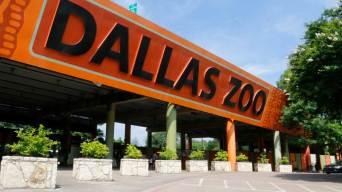 Hoy: Zoológico de Dallas ofrece entrada por $1