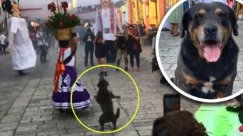"""""""Mazapán"""", el perro callejero que es furor por sus bailes"""