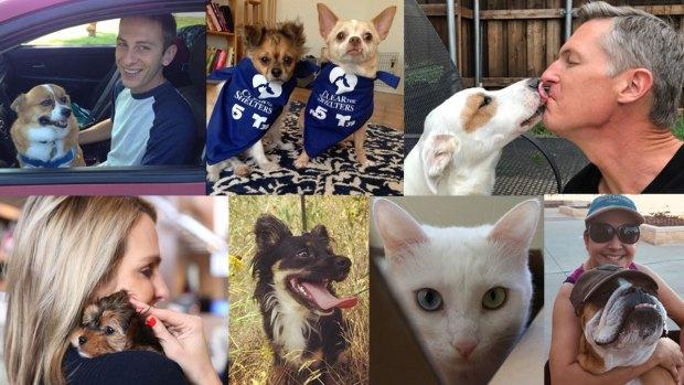 Historias de amor: Las mascotas rescatadas por el equipo de Telemundo 39 y NBC 5