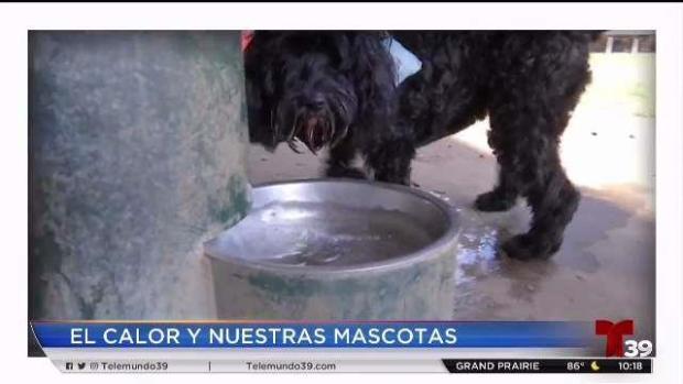 [TLMD - Dallas] Consejos para proteger animales por calor