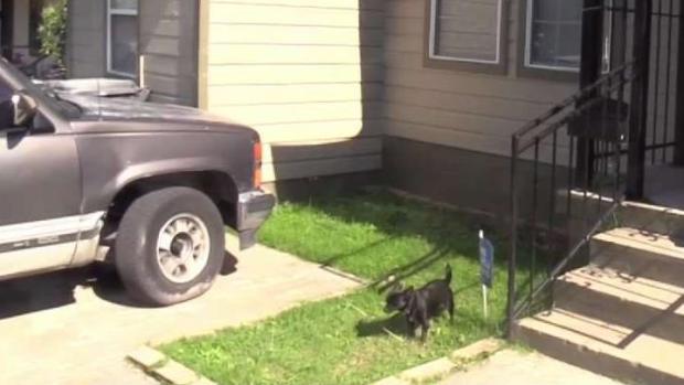 [TLMD - Dallas] Dormir con sus perros en su auto le costó la vida