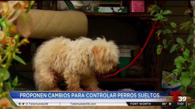 [TLMD - Dallas] El problema de los perros callejeros en Dallas
