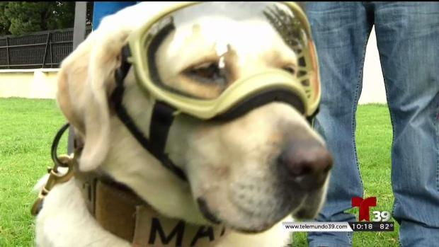 Frida, la famosa perra rescatista