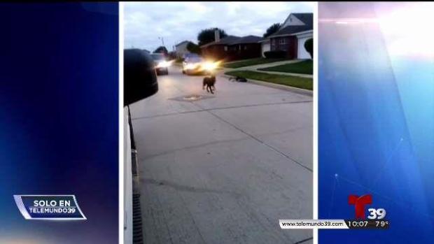[TLMD - Dallas] Policía de Arlington presuntamente baleó a un perro