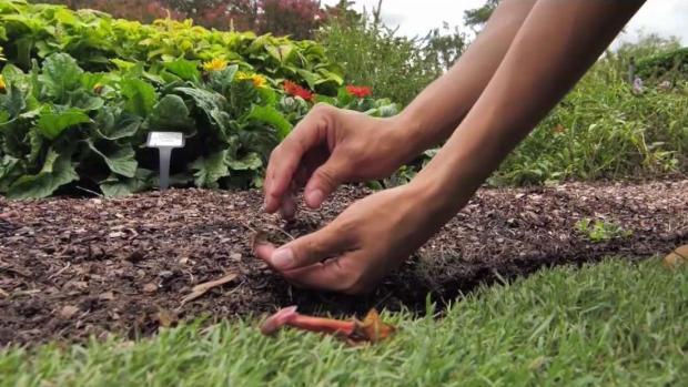 [TLMD - Dallas] La jardinería y las mejores flores para el otoño
