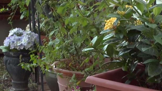 [TLMD - Dallas] Vuelve a ocurrir: Se roban plantas de vivienda en Oak Cliff