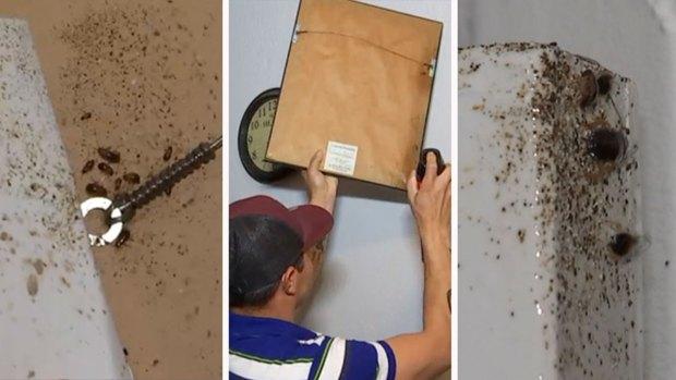 Denuncia apartamento infestado de cucarachas al norte de Texas