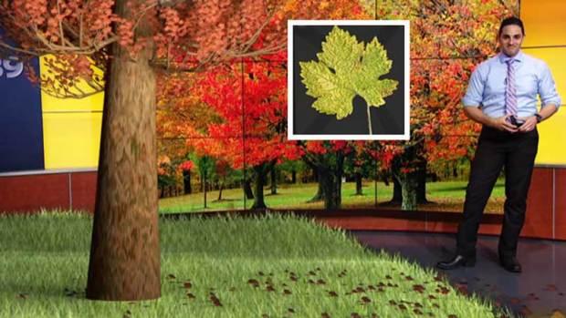 [TLMD - Dallas] ¿Por qué cambian de color las hojas en el otoño?