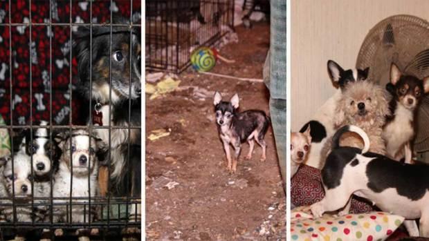 Toman custodia de 58 animales rescatados al este de Dallas