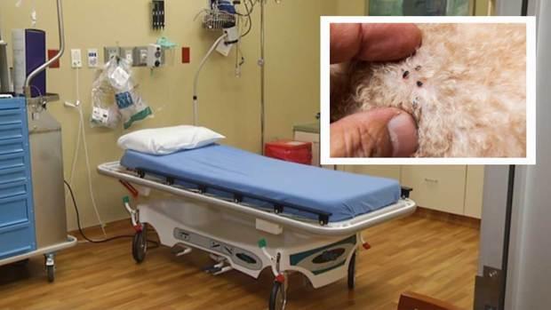 Tifus: La peligrosa enfermedad por la que advierten a residentes al norte de Texas