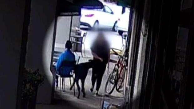 En Dallas: Perro muerde a mujer y el dueño como si nada