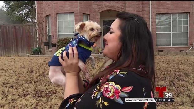 [TLMD - Dallas] Se reencuentra con su perro una década después